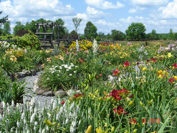 Daylily Garden at Rural Roots